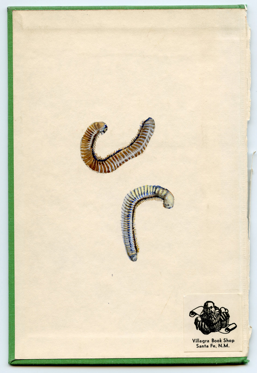 http://yellowfalling.com/files/gimgs/9_martinmillipedes.jpg